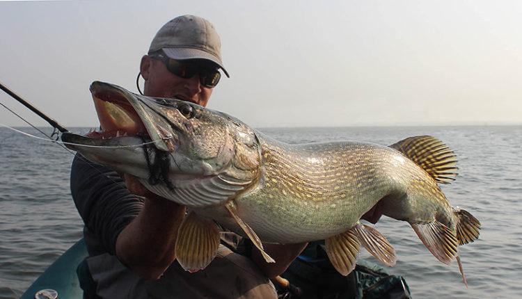 Ловля крупной рыбы на спиннинг