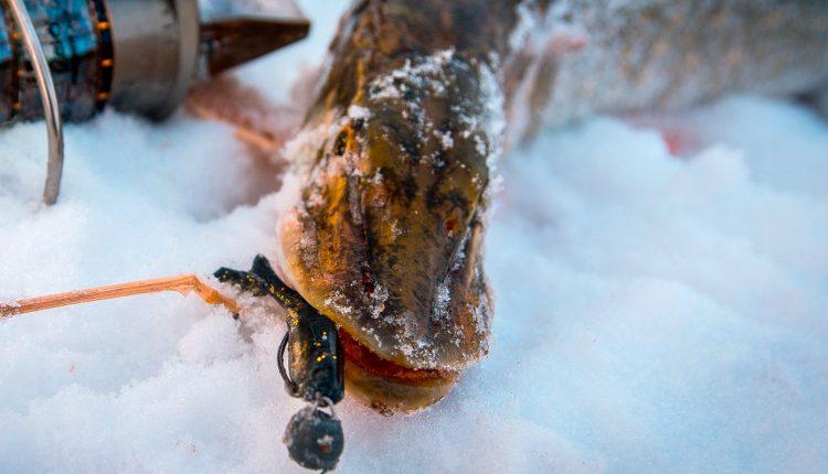 Ловля щуки зимой на джиг со льда