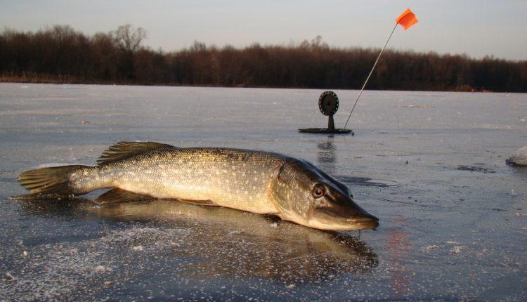 Щука на живца зимой со льда