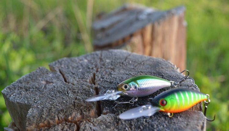 Ловля щуки на кренки летом