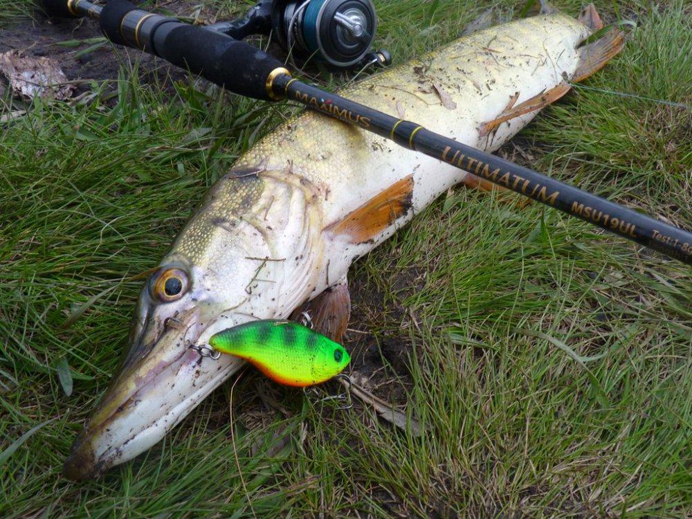 Как ловить щуку на раттлины