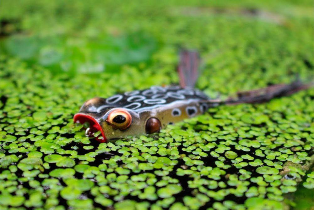 Лягушка-незацепляйка в ряске