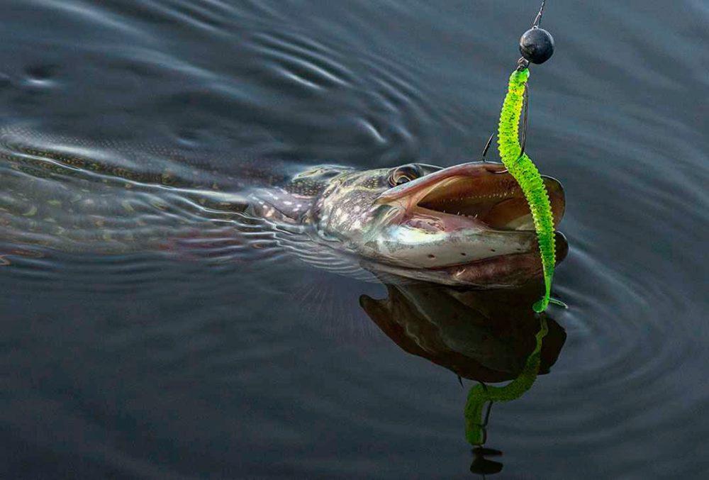 Щука пойманная на офсетный крючок