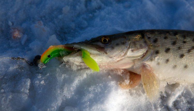 Ловля щуки на силиконовые приманки со льда