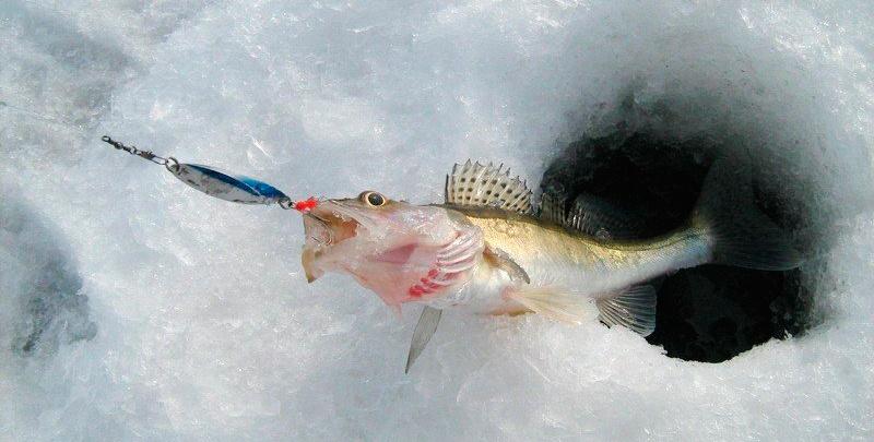 Ловля на блесну кастмастер зимой со льда