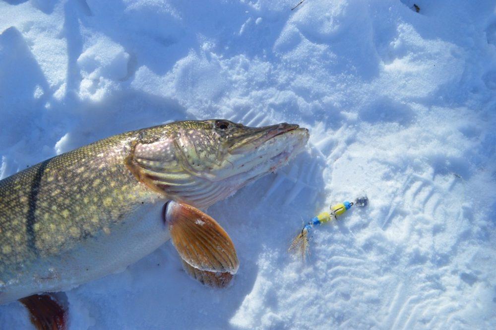 Рыбалка на мандулу зимой