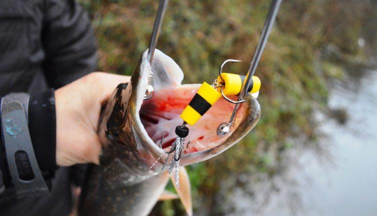 Рыболовная приманка мандула в пасти у щуки
