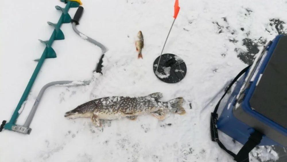 Ловля щуки на жерлицы со льды