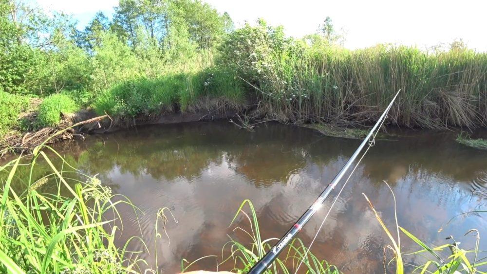 В поисках щуки на малой речке
